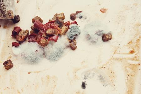 fungal disease: Disgusting mold on the food
