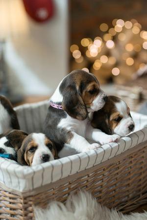 Little puppies