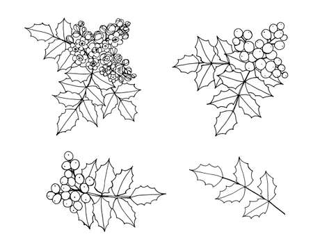 Set of isolated elements of the branch of Mahonia, oregon-grape with flowers, berries, leaves. Vector black outline illustration.