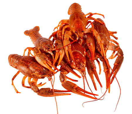 red cooked: Bunch of red cooked crayfish, on a white background