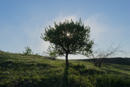 the view from below: magical sunrise with tree view from below Stock Photo