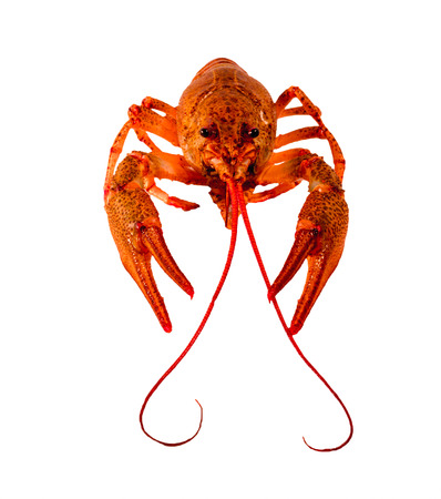 red cooked: juicy red cooked crayfish with a mustache and bulging eyes on a white background. Stock Photo