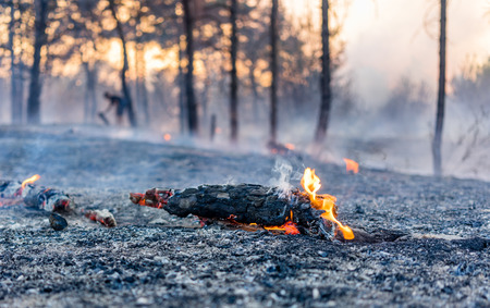 burns: the effects of a forest fire, the fire still burns Stock Photo
