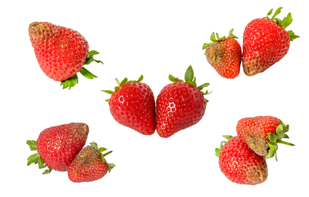 uneatable: Rotten strawberries isolated on white background closeup,