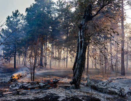 fire in the forest, the trees are burning a lot of smoke Stock Photo