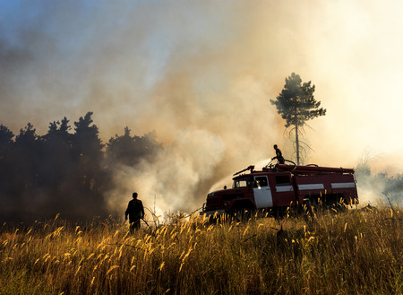 dampen: Smoldering remains of a green forest with a fireman spraying water