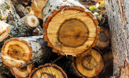 firewood for the heating season Solid fuel