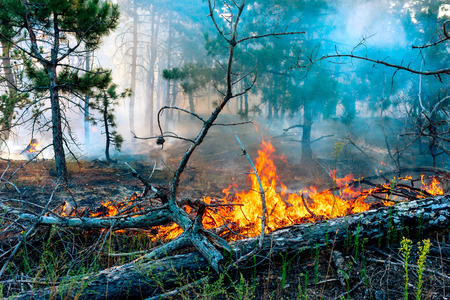 wildfire: Forest fire burning, Wildfire close up at day time