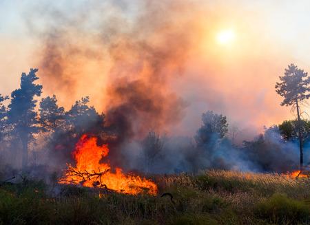 Forest fire. Using firebreak for stoping wildfire Foto de archivo