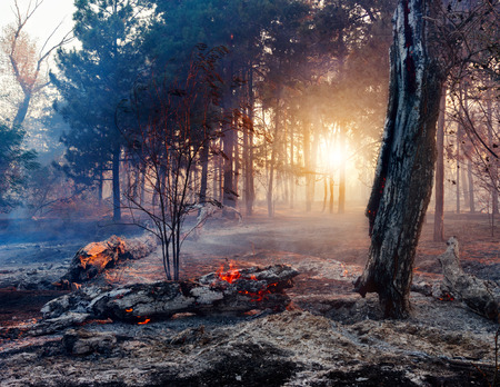 wildfire: Forest fire. Using firebreak for stoping wildfire Stock Photo