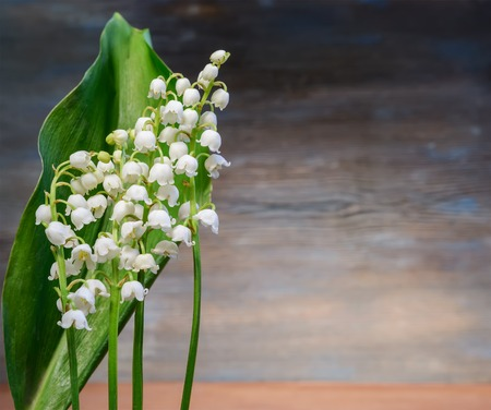 A beautiful bouquet of flowers Lily of the valley on a blue wooden background Stock Photo