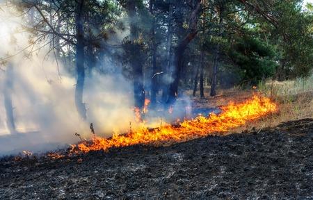 La lumière du soleil brise la fumée d'un feu de forêt. Banque d'images - 80054475