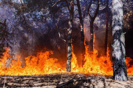 Forest fire. fallen tree is burned to the ground a lot of smoke when wildfire Stock Photo - 83334834