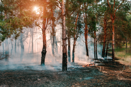 combustion: Smoke from a fire in the forest
