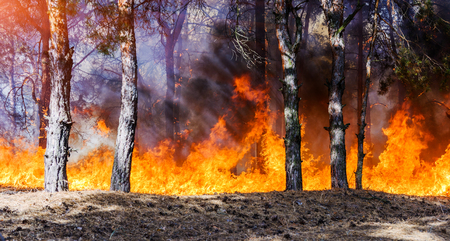 Forest fire burning, Wildfire close up at day time Stock Photo - 85103020