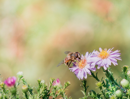 Bee moving from flower to flower pollinating as it goes