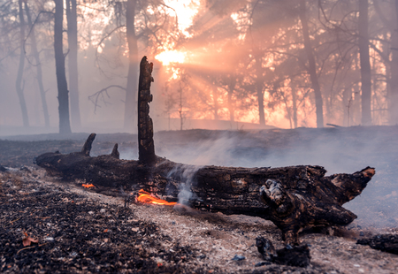 Forest fire burning, Wildfire close up at day time. Stock Photo