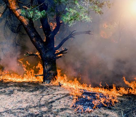 Un incendio di arbusti che brucia arancione e rosso di notte. Archivio Fotografico