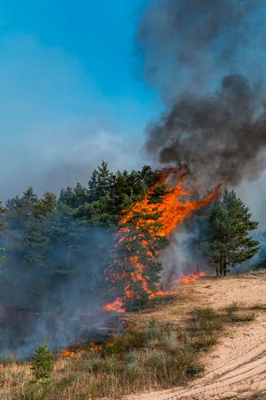 A wildfire burns in a fir and aspen forest.