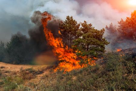 Bosbrand. Verbrande bomen na natuurbrand, vervuiling en veel rook. Stockfoto