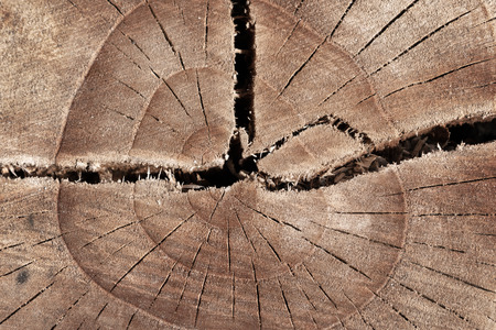 Abstract texture of tree stump, crack wood ancient.