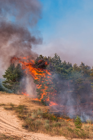 fire. wildfire at sunset, burning pine forest in the smoke and flames Stock Photo - 125122061