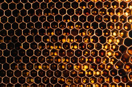 Honeycomb Texture Sweet nectar not yet extracted from the honeycomb. Background of honeycombs in dark golden hues. Macro shooting of honeycombs. Decorative background.