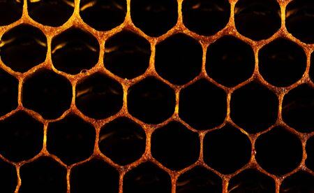 Honeycomb with honey and pollen. Sweet and natural honey inside the honeycomb. Background of honeycombs. Beeswax