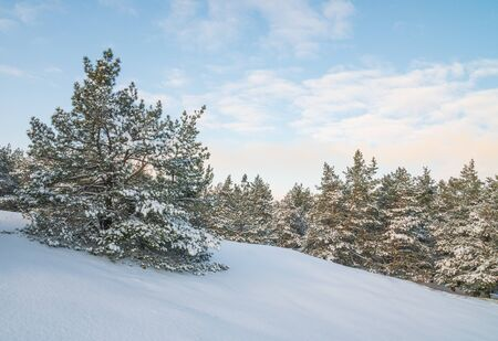 Beautiful winter landscape with snow covered trees. Forest in the frost. Zdjęcie Seryjne