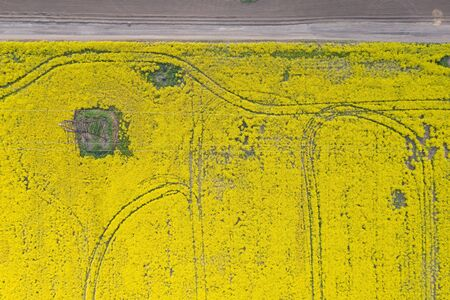 flowering rapeseed field from a height at day time.