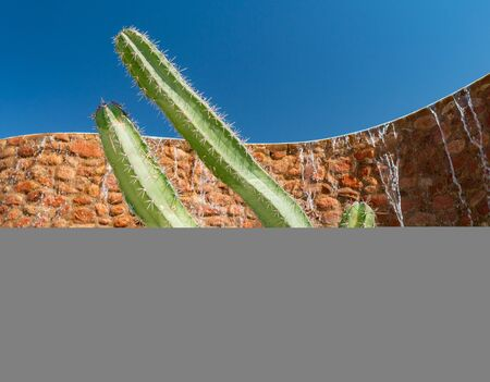 cactus on the background of an artificial waterfall in the garden.