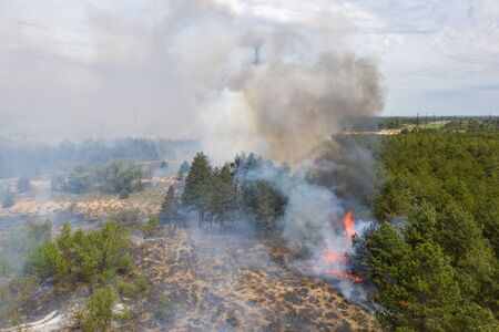 Aerial view of a fire in a pine forest. Disaster filming by drone. Zdjęcie Seryjne - 147920533