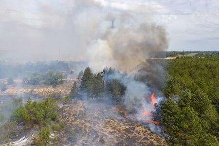 Vue aérienne d'un incendie dans une forêt de pins. Filmer la catastrophe par drone.