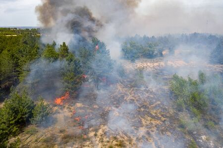 Aerial view of a fire in a pine forest. Disaster filming by drone.