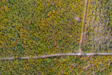 Aerial view of autumn forest with green and yellow trees. Background of mixed deciduous and coniferous forest.