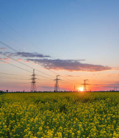 Power lines and high-voltage lines against the backdrop of blooming oilseed rape at sunset. Green energy.