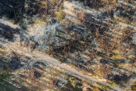 A burnt-out coniferous forest with fallen trees. Consequences of a natural disaster. Aerial view.