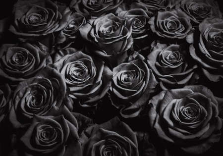 Black roses background. Greeting card for the holiday. Bouquet of black roses.