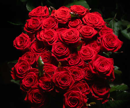 Red roses collected in a gift bouquet on a dark background. Greeting card.