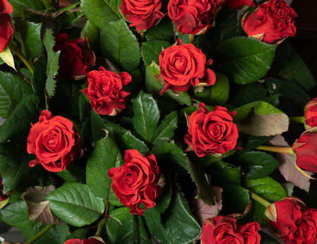 Red roses background. A bouquet of beautiful and selective roses. Rose as a symbol of love and beauty.