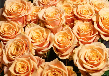 Orange roses background. A bouquet of beautiful and selective roses. Rose as a symbol of love and beauty Zdjęcie Seryjne