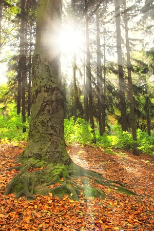backlite: Suuny forest in the morning Stock Photo