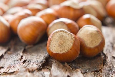 unbroken: Hazelnuts (filbert) on the bark