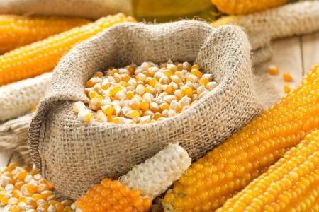 mais: Corn Stock Photo