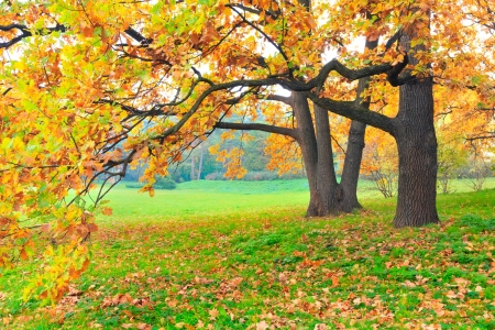 natural scenery: Autumn trees