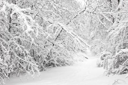 in winter: Foresta di inverno Archivio Fotografico