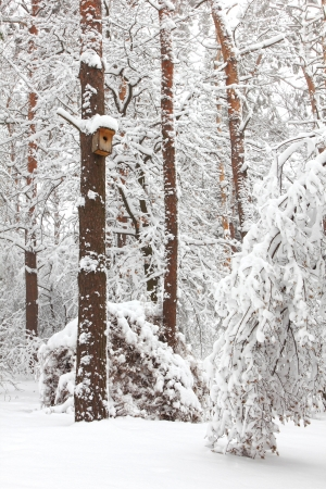 Winter forest photo