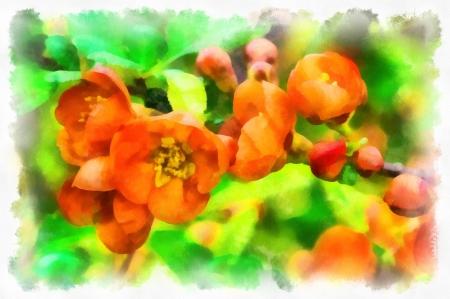 Spring flowers  Digital art photo