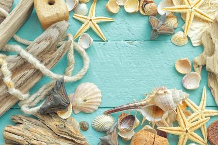 conch shell: Sea shells Stock Photo