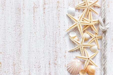 stella marina: Conchiglie di mare Archivio Fotografico